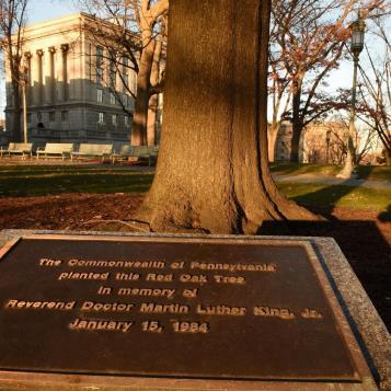 Our Photo of the Day is of a tree planted in Capitol Park honoring the life, the service and the sacrifice of the Rev. Dr. Martin Luther King, Jr. in making a better world for all of us.