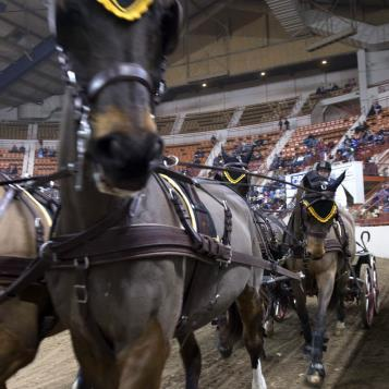 Our Photo of the Day takes you up close and personal with one of the equine athletes competing at the carriage races at the PA Farm Show.